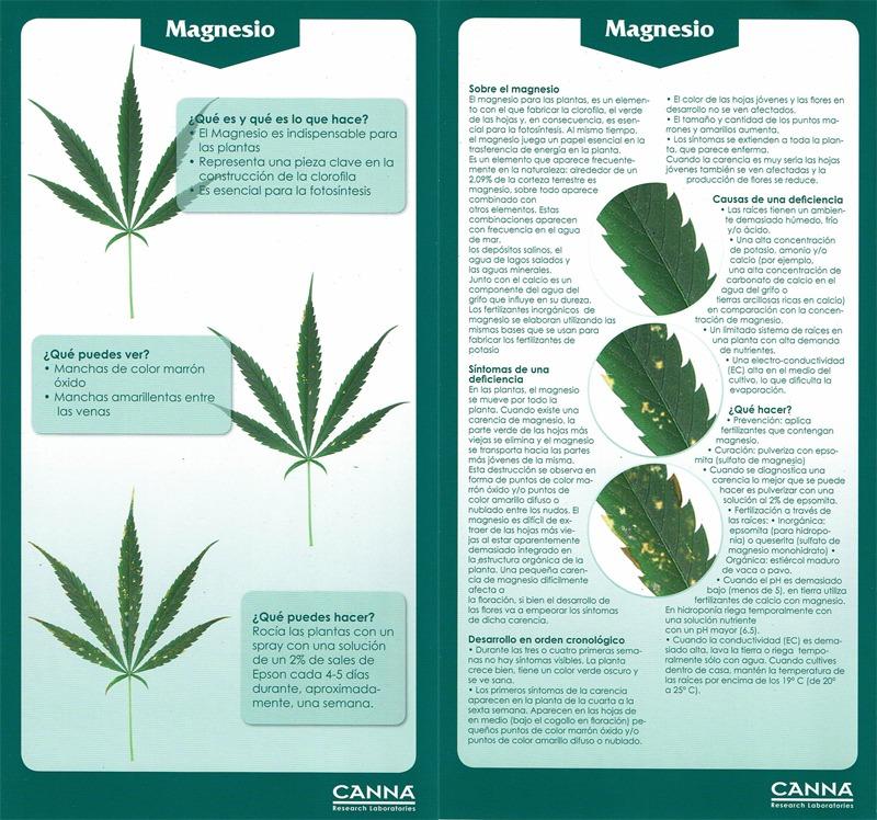 canna magnesio
