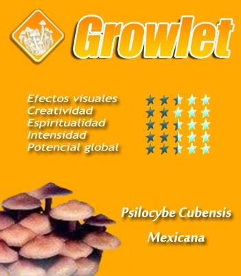 Psilocybe Cubensis Mexicana