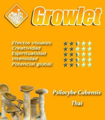 Psilocybe Cubensis Thai