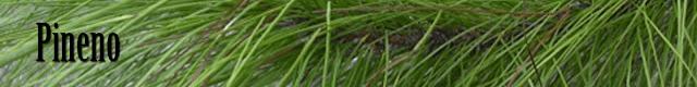 Logo terpeno pineno