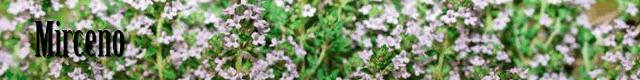 Logo terpeno Mirceno